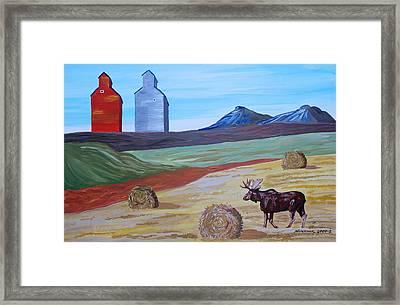 Montana Moose Framed Print by Mike Nahorniak
