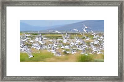 Montana, Red Rock Lakes National Framed Print by Elizabeth Boehm