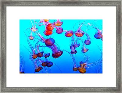 Monterey Bay Jellyfish Framed Print by Barbara Snyder