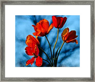 Mood Bouquet Framed Print by Frozen in Time Fine Art Photography
