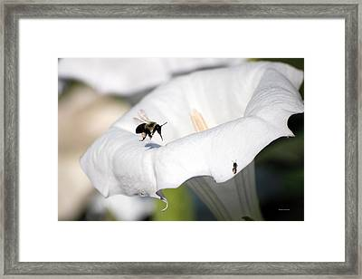 Moon Flower 3 Framed Print by Thomas Woolworth