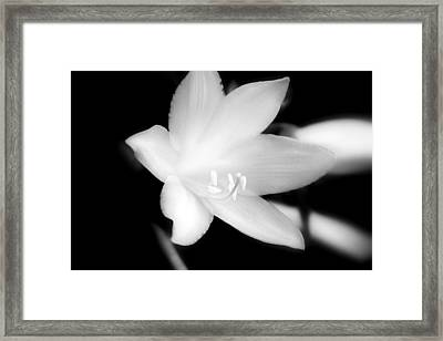 Moon Flower Framed Print by Glenn Curtis