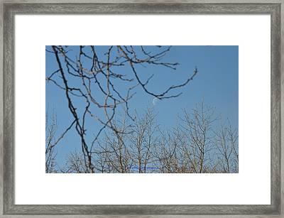 Moon On Treetop Framed Print by Sonali Gangane