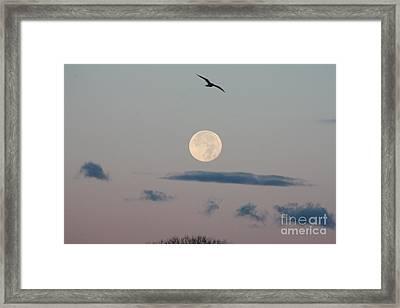 Moon Setting Over Oceanside Framed Print by John Telfer