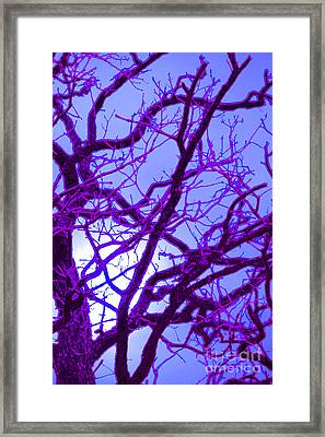Moon Tree Purple Framed Print by First Star Art