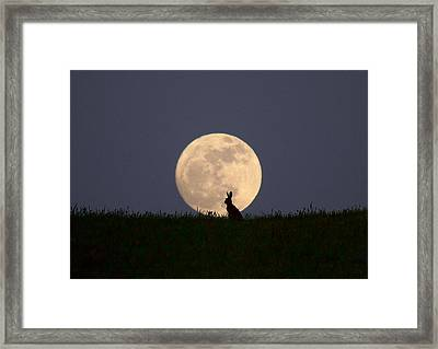 Moongazer Framed Print by Steve Adams