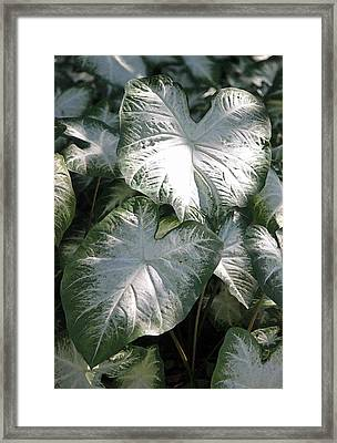Moonlight Garden II Framed Print by Suzanne Gaff
