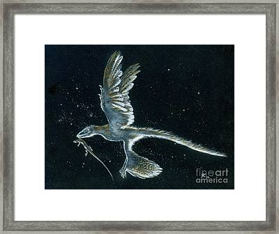 Moonlight Hunt - Microraptor Framed Print by Julius Csotonyi