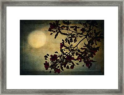 Moonlight Framed Print by Maria Angelica Maira