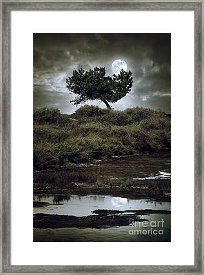 Moonlight Swamp Framed Print by Carlos Caetano