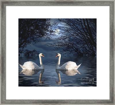Moonlight Swim Framed Print by Juli Scalzi