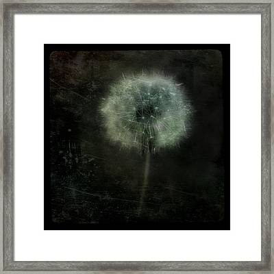Moonlit Dandelion Framed Print by Gothicolors Donna
