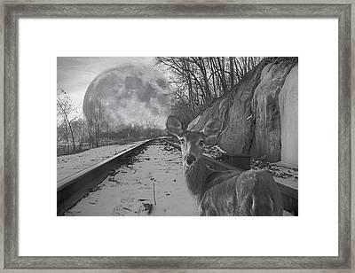 Moonshine Deer Tracks Framed Print by Betsy C Knapp