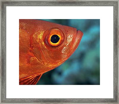 Moontail Bullseye Framed Print by Louise Murray