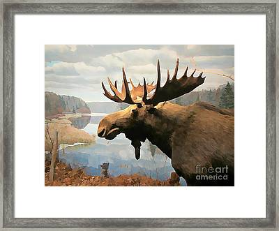Moose At Lake Framed Print by John Malone