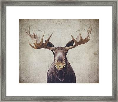 Moose Framed Print by Nastasia Cook