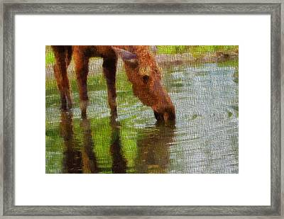 Moose On Canvas Framed Print by Dan Sproul