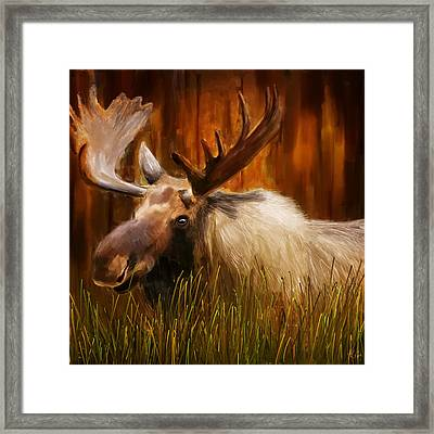 Moose Solitude Framed Print by Lourry Legarde