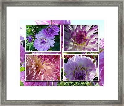 More Dahlias Framed Print by Susan Garren
