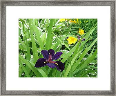 More Than Me Framed Print by Suzanne Perry