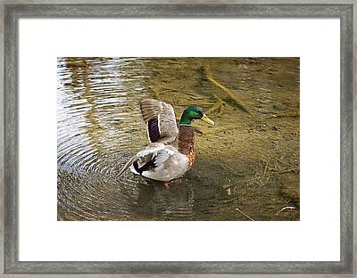 Morning Bath Framed Print by Maria Angelica Maira