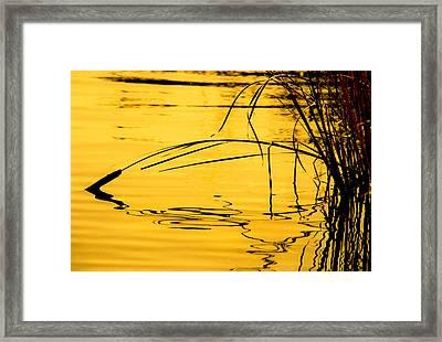 Morning Cattails Framed Print by Marilyn Hunt