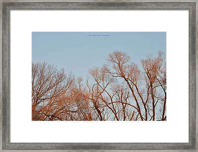 Morning Coloured In Fall Framed Print by Sonali Gangane