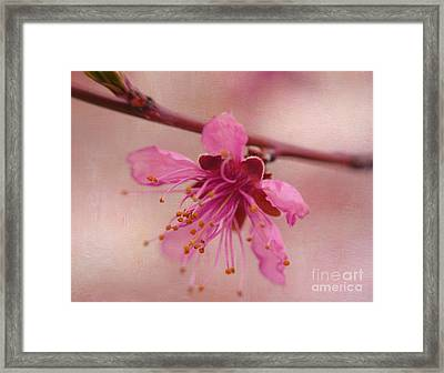 Morning Dance Framed Print by Irina Wardas