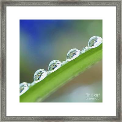 Morning Dew Drops Framed Print by Heiko Koehrer-Wagner