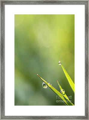 Morning Dew On Grass Framed Print by LHJB Photography