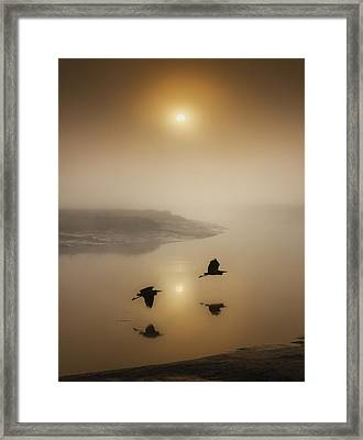 Morning Duet Framed Print by Adrian Campfield