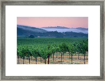 Morning Fog Over Vineyards In The Alexander Valley  Framed Print by Gary Crabbe