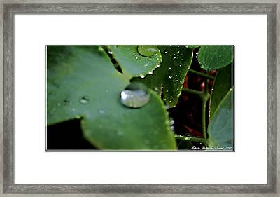 Morning Fresh Leaves With Droplets Framed Print by Danielle  Parent