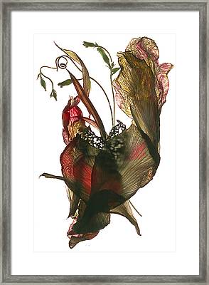Morning Glory Canna Heart Framed Print by Julia McLemore