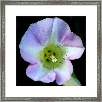 Morning Glory Floral Window Framed Print by Neal  Eslinger