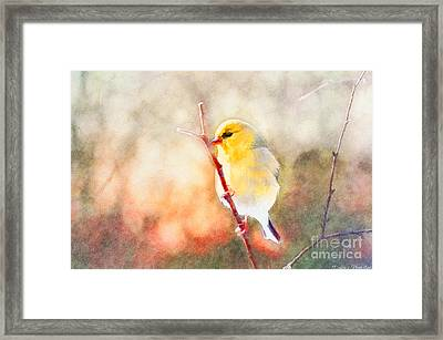 Morning Goldfinch - Digital Paint II Framed Print by Debbie Portwood