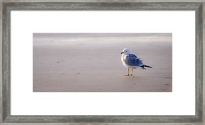 Morning Gull Framed Print by Kelly McNamara