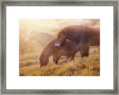 Eat Free Framed Print featuring the photograph Morning Impresion With Horses by Jaroslaw Blaminsky