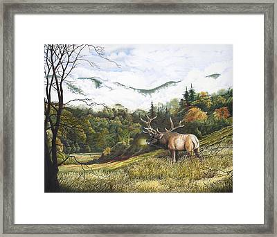 Morning In The Valley Elk In Cataloochee Valley Framed Print by Richard Devine