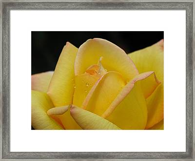 Morning Kiss Framed Print by Juergen Roth