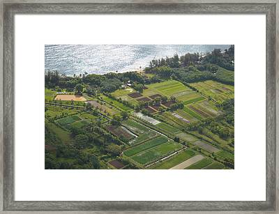 Morning Light Over Kauai Taro Fields Framed Print by Kai Hyde