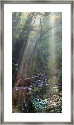 Morning Light Framed Print by Tom Mc Nemar