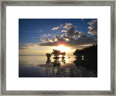 Morning Mangrove Trees Framed Print by Joe Myeress