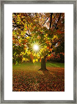 Morning Maple Framed Print by Mircea Costina Photography