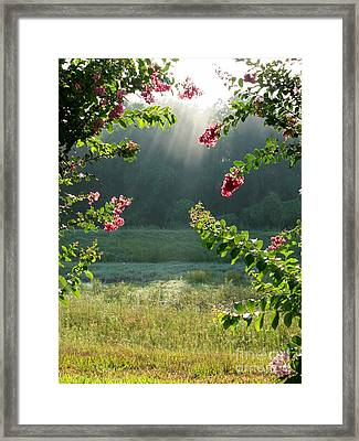 Morning Marsh Framed Print by Carol Groenen