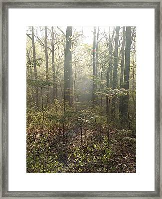 Morning Mist In The Forest Framed Print by Bill Cannon