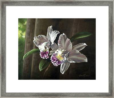Morning Orchids Framed Print by Joan Garcia