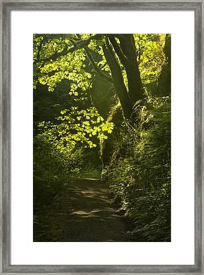 Morning Path Framed Print by Andrew Soundarajan