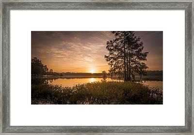 Morning Pull Framed Print by Steve DuPree