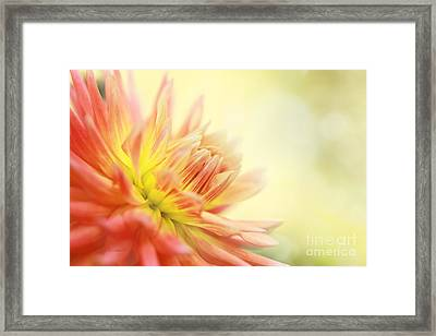 Morning Serenade Framed Print by Beve Brown-Clark Photography